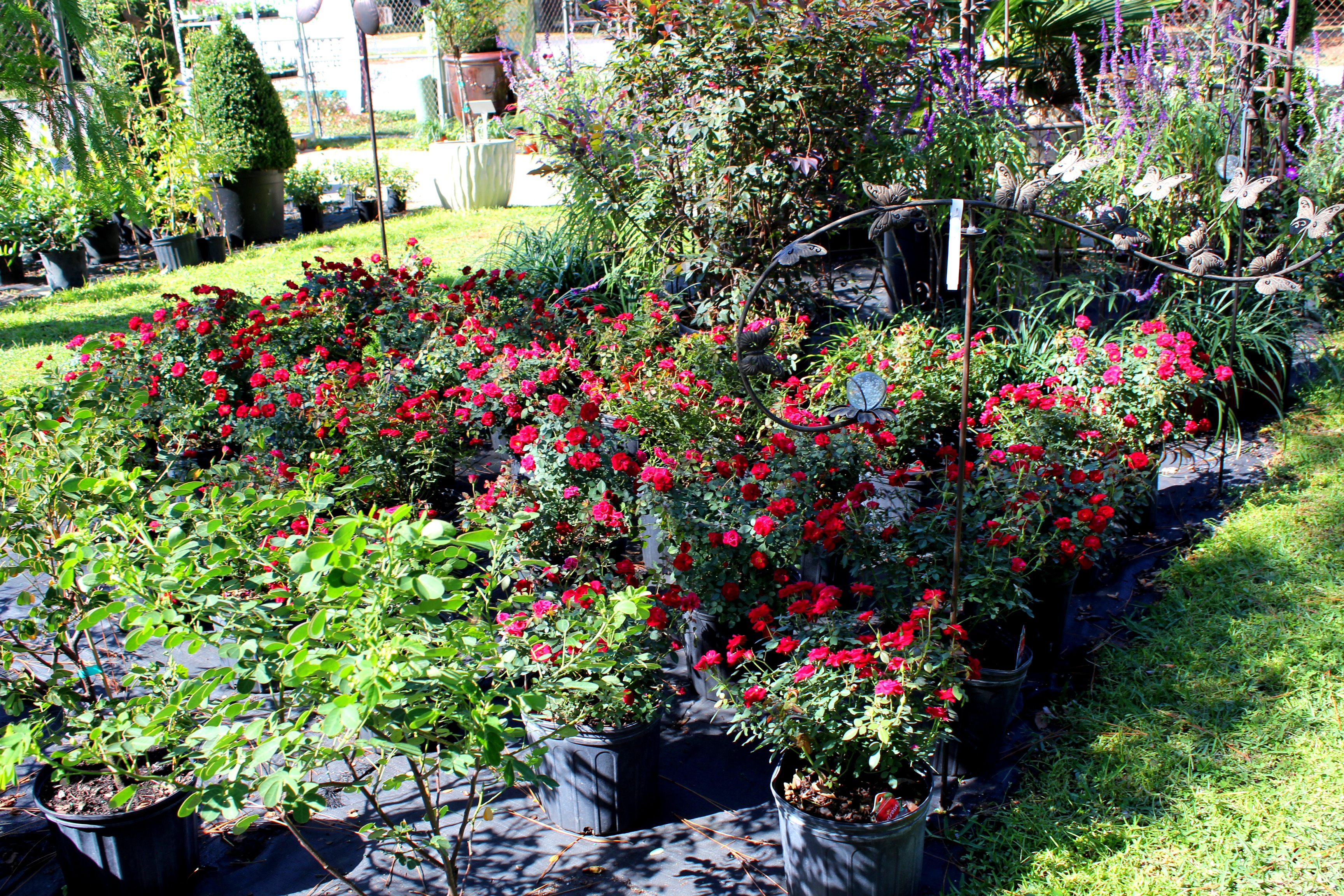 emerald coast nursery plant nursery in niceville fl